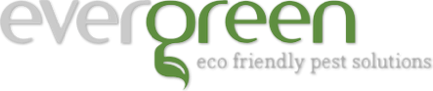 Evergreen eco friendly pest solutions